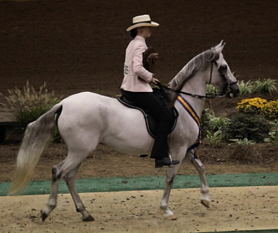 Ferrari Of New England >> Florida Paso Fino Association » About the Breed